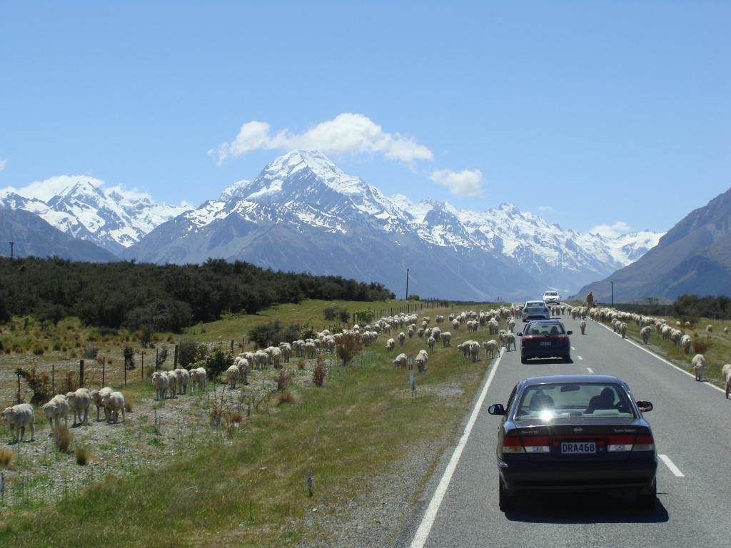 32.000.000 Schafe müssen ja irgendwo sein