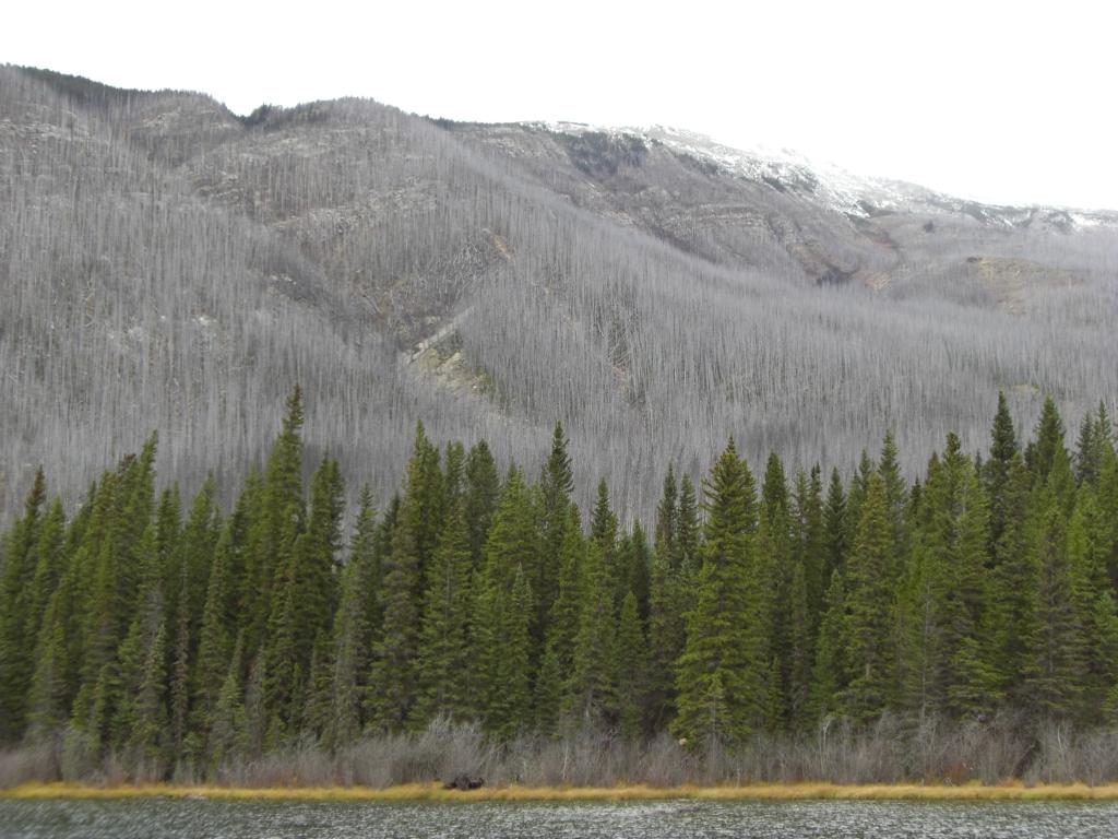 Abgebrannter Wald
