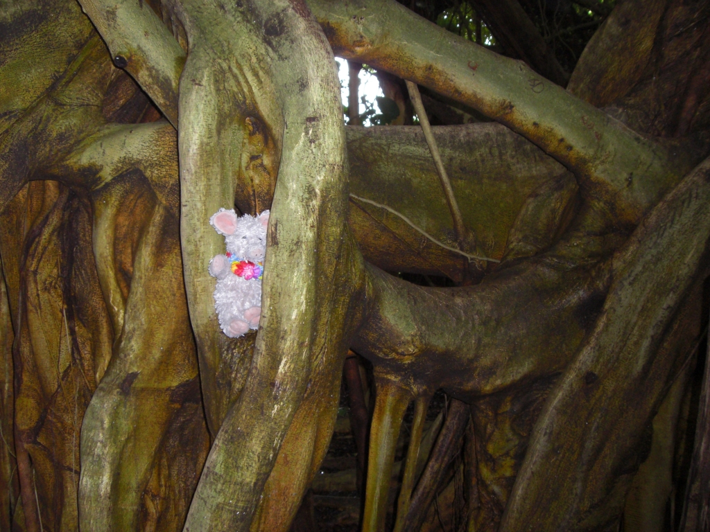 Banyan Tree 3