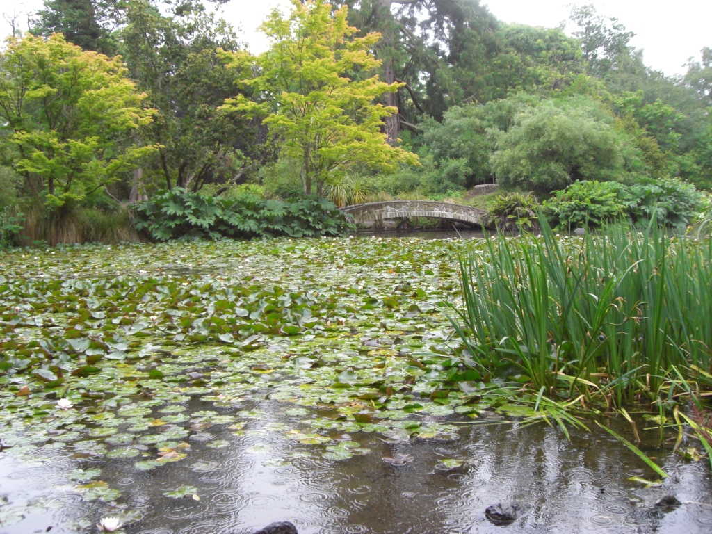 Botanischer Garten im Regen