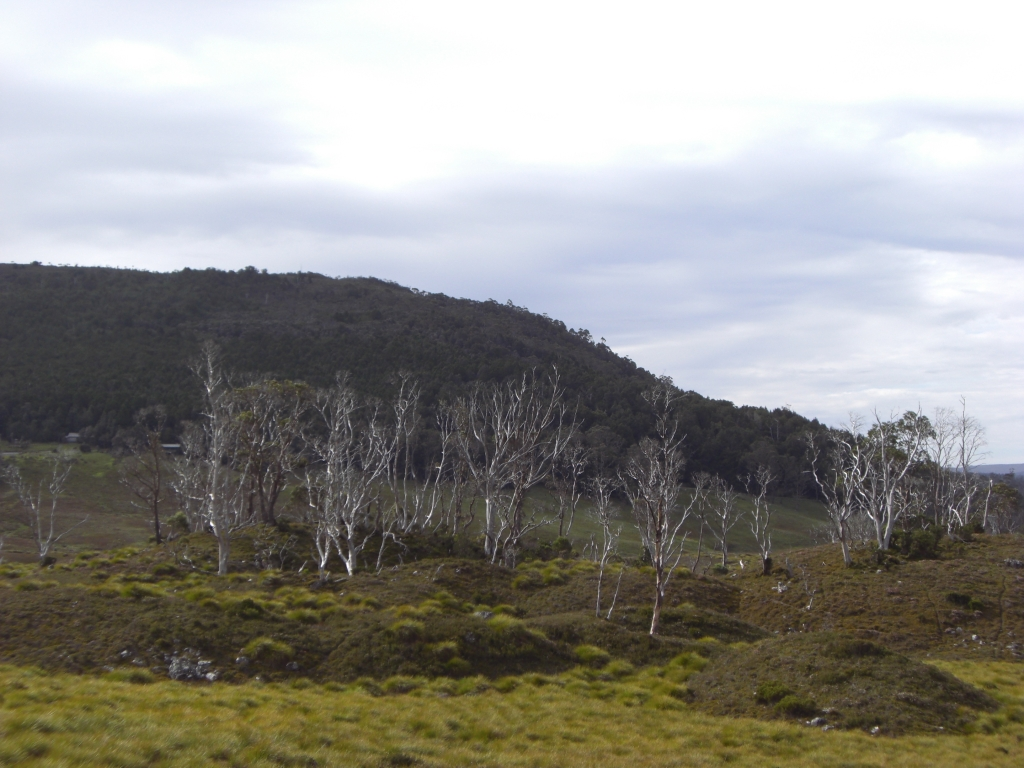 Cradle Mountain National Park 5