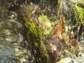 Erfrischendes Tropfwasser
