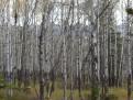 Ich seh den Wald vor lauter Bäumen nicht