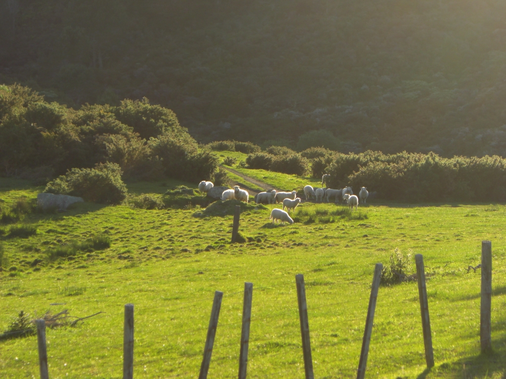Nordinsel, NZ