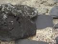 Petroglyph Beach