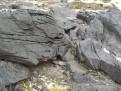 Petroglyph Beach 4