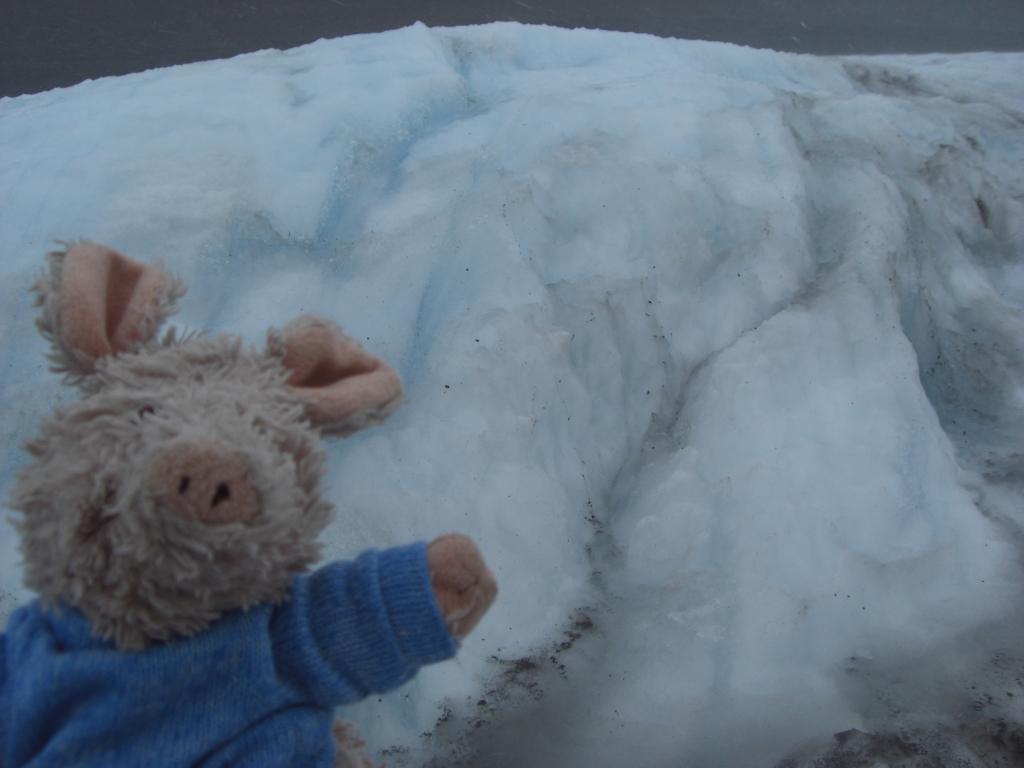 Pig on Ice