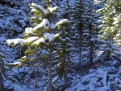 Schnee ist einfach so dekorativ