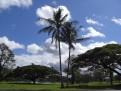 Typisch Hawaii 3