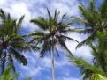 Typisch Hawaii 4