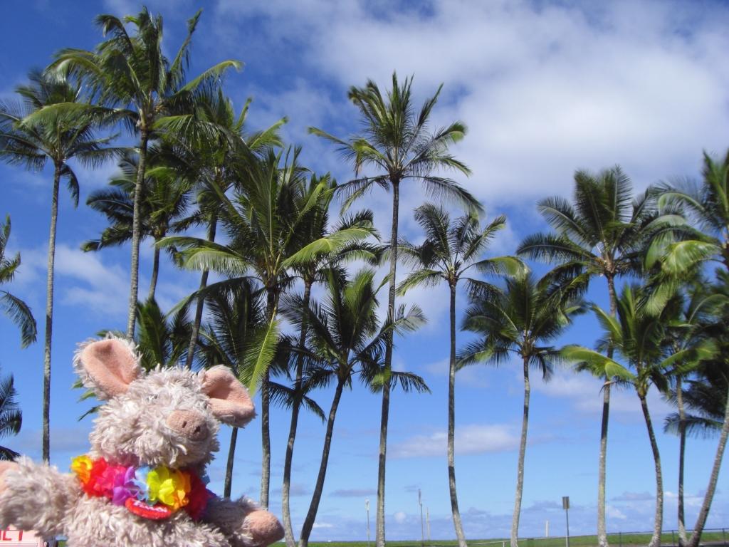 Typisch Hawaii