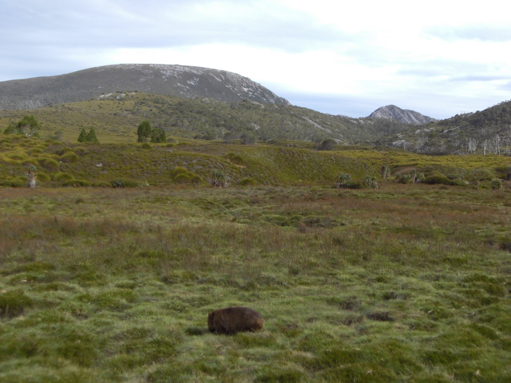 Wombat and National Park